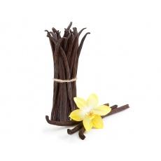 Vanilka BIO | LUSK 1ks velikost 18-20 cm JUMBO průměrná váha cca 4-7g